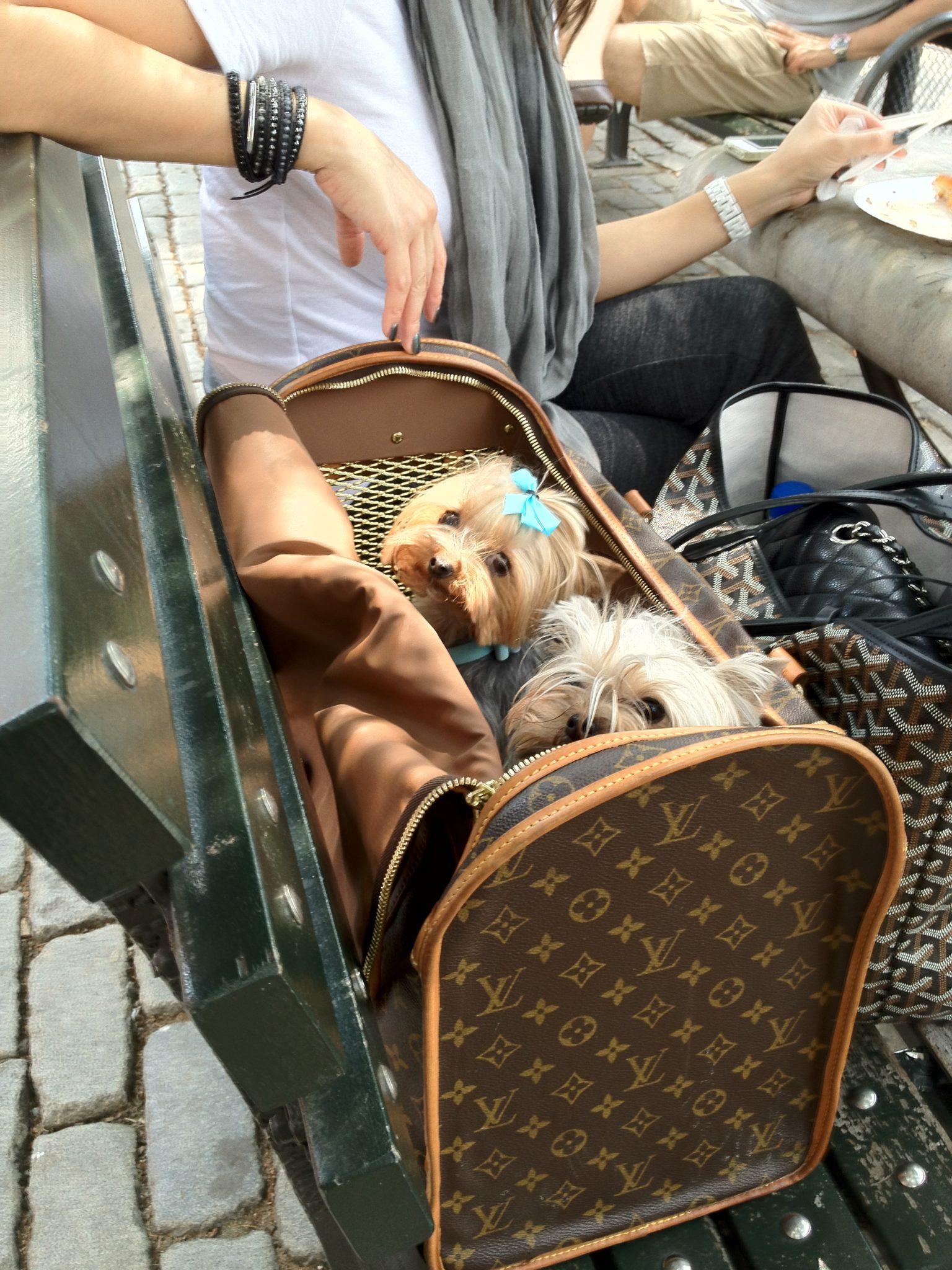 Dog in Louie Vuitton