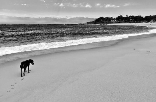 Monastary Beach, CA