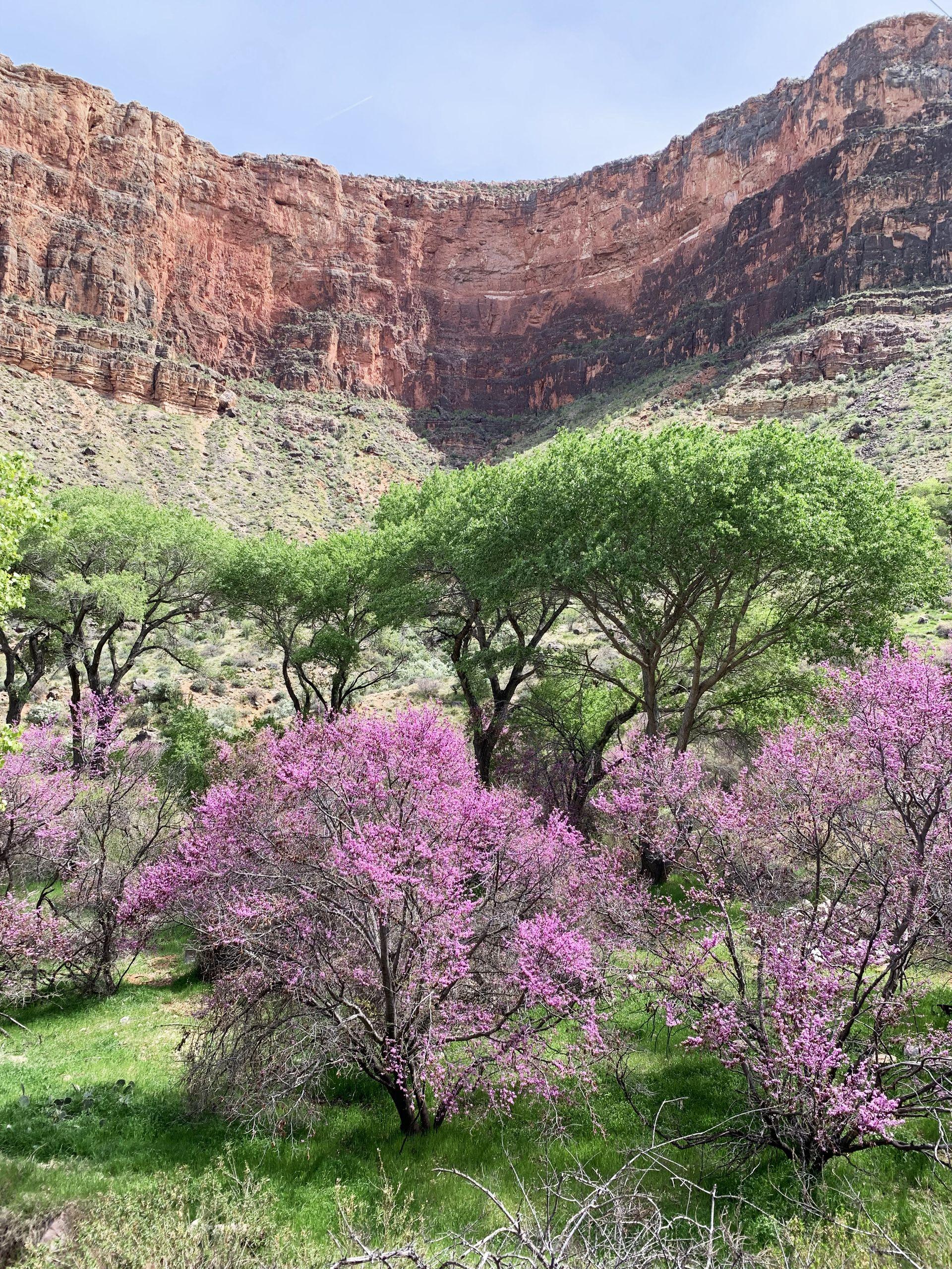 Indian Garden Grand Canyon